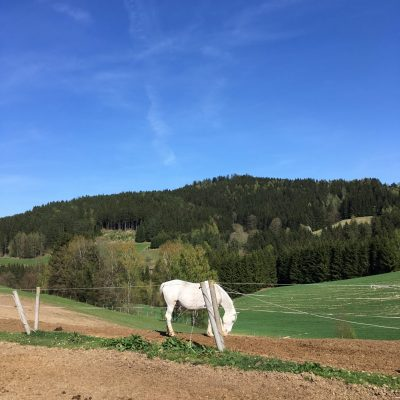 Moser Alm, GoWithTheFlo3